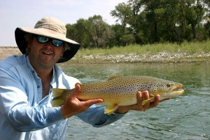 South West Alberta Brown Trout